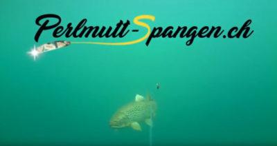 2 Seeforellen Fehlbiss auf Rainbow Perlmutt Spange